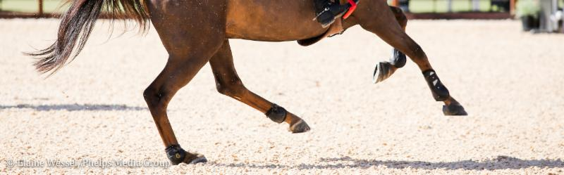 hoof interaction with arena footing