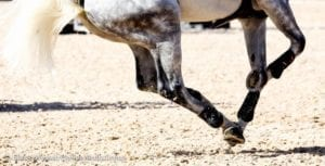 Horse galloping on geotextile footing