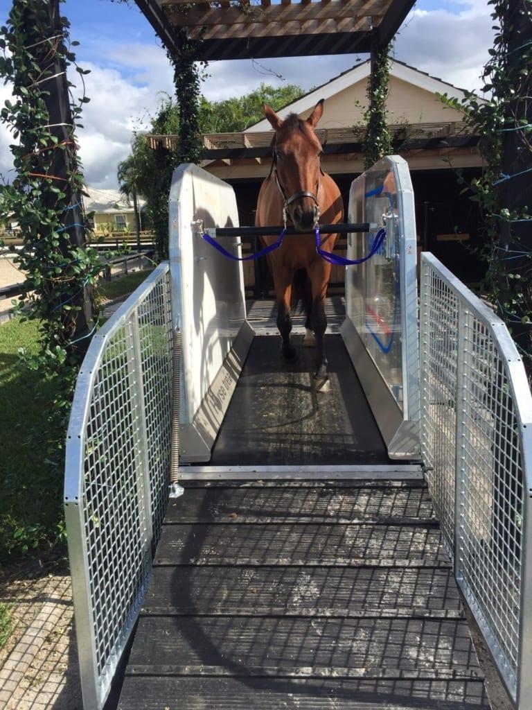 horse using treadmill