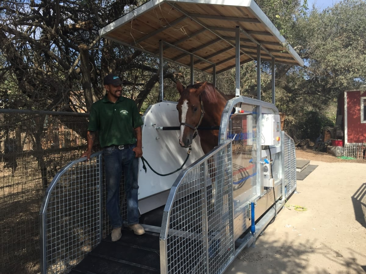 horse treadmill in action