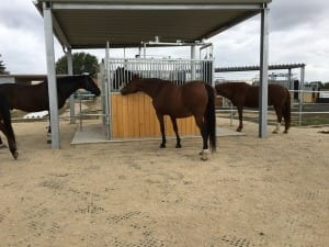 Horses enjoying paddock mats covered with sand