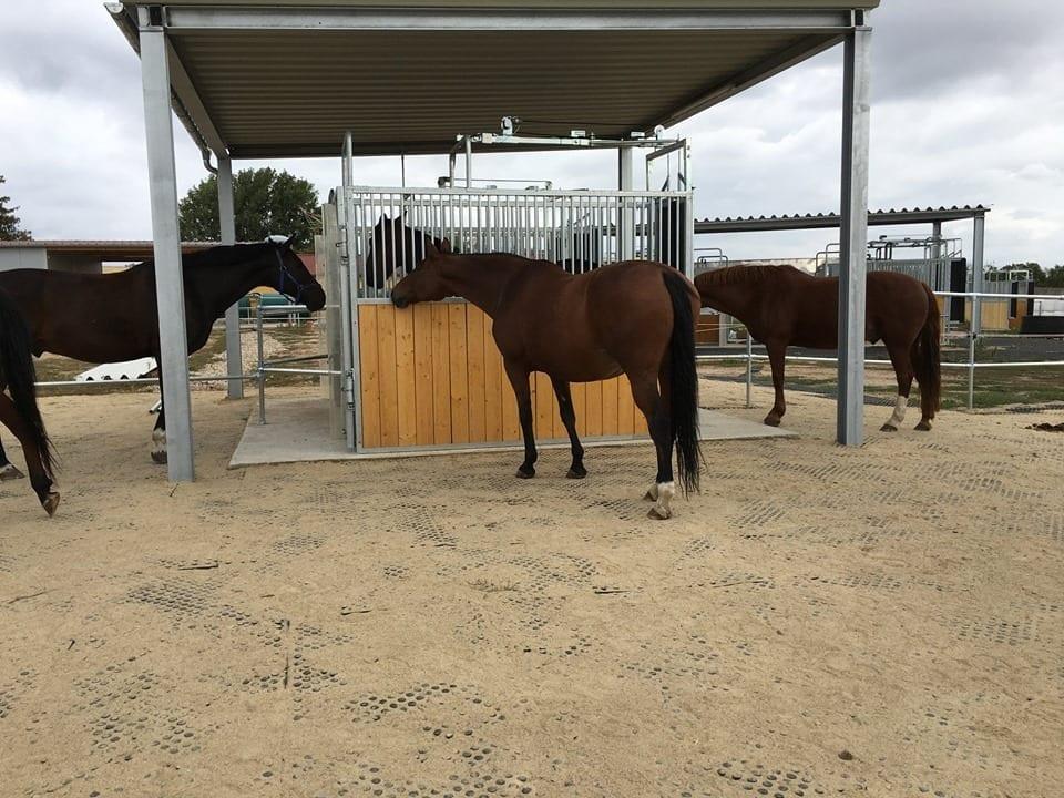 Horses enjoying paddock mats covered with sand