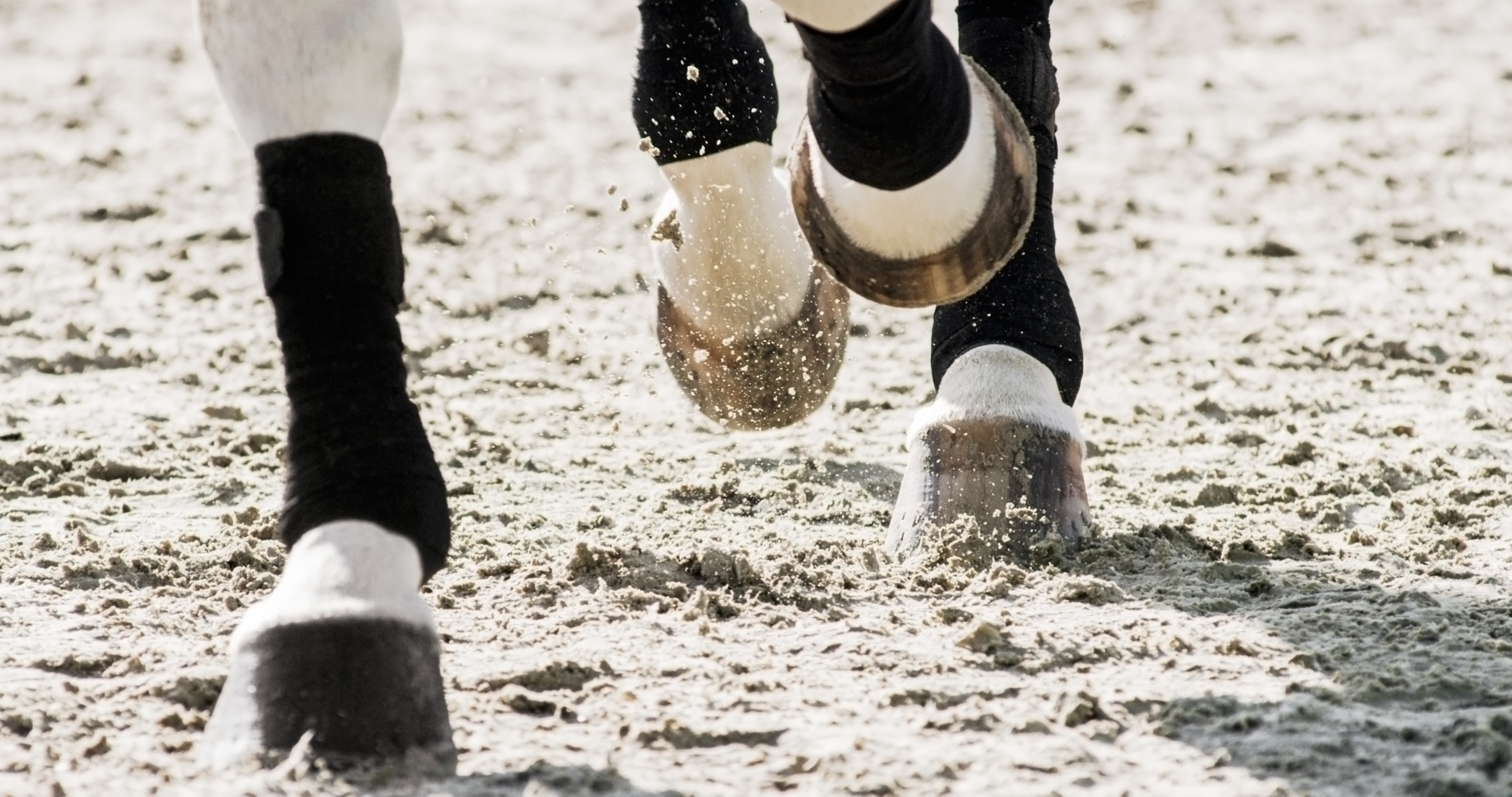 Horse Arena Footing in Action