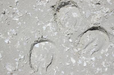 Hoofprints in our geotextile footing