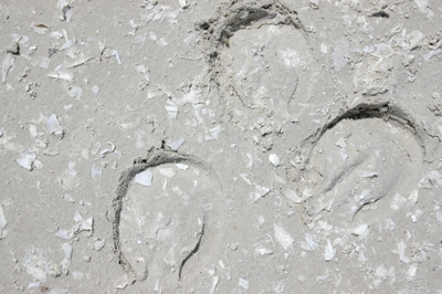 Hoofprints in our geotextile footing