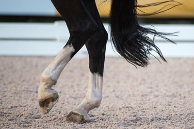 A dressage horse is ridden in an arena mixed with FSGeoTEX