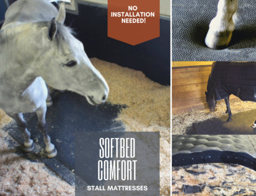 Caring for Your Horse from the Ground Up with SoftBed Comfort Stall Mats
