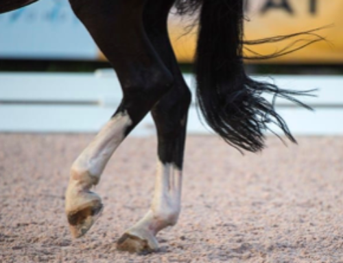 The Effects of Arena Footings on Horse Soundness: Part 1
