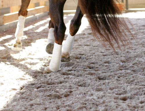 How to Navigate Issues With and Improve Your Arena Footing